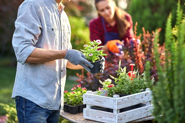 ブログ ガーデニング 小さな庭 人気ブログランキングとブログ検索