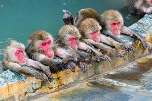 サルと温泉